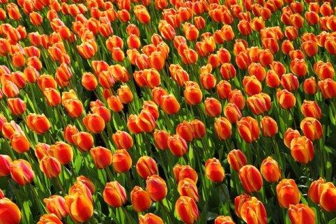 Hou van Holland Dinerspel Alkmaar