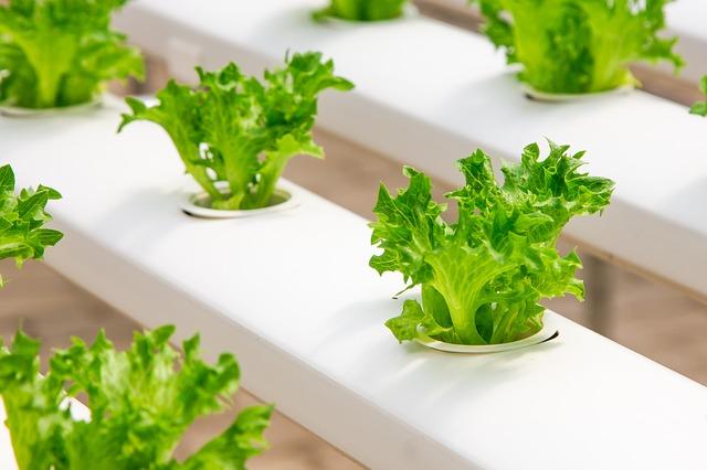 organic-farming-greenhouse