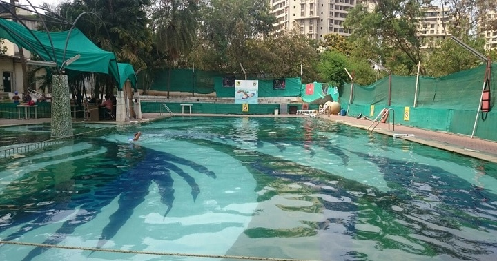 The Royal Club: swimming pool in Pune