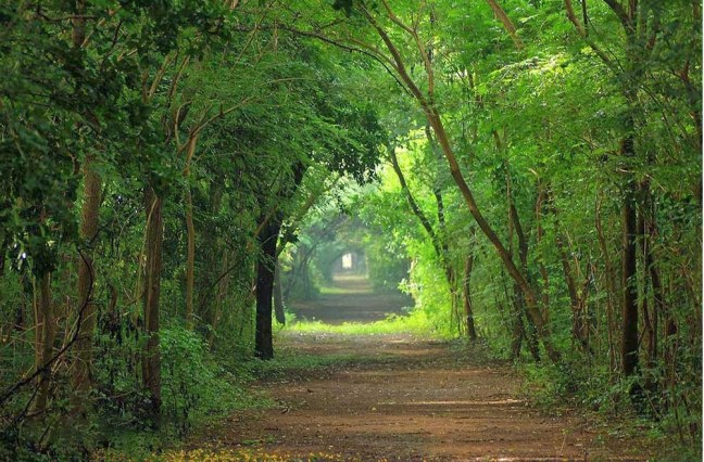 huddlestone running tracks in chennai
