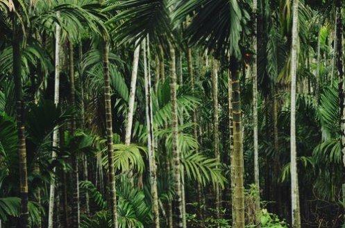 Foto van Bamboe. Hiervan worden houten zonnebrillen gemaakt.