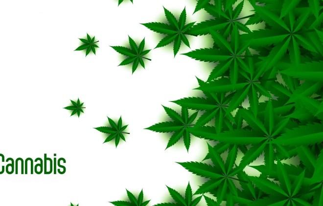 Green Cannabis plant on white background design