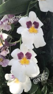 The 17th Annual Orchid Show