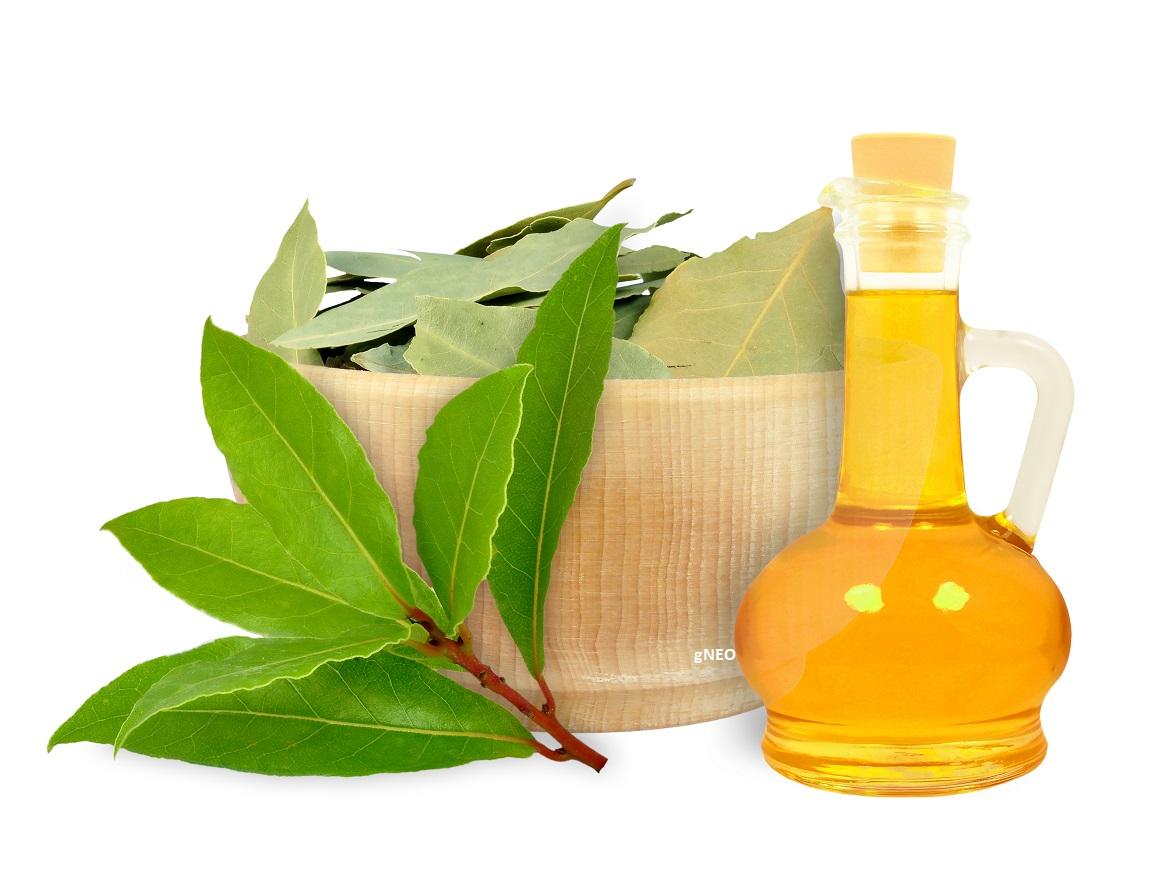 Laurel Leaf Essential Oil