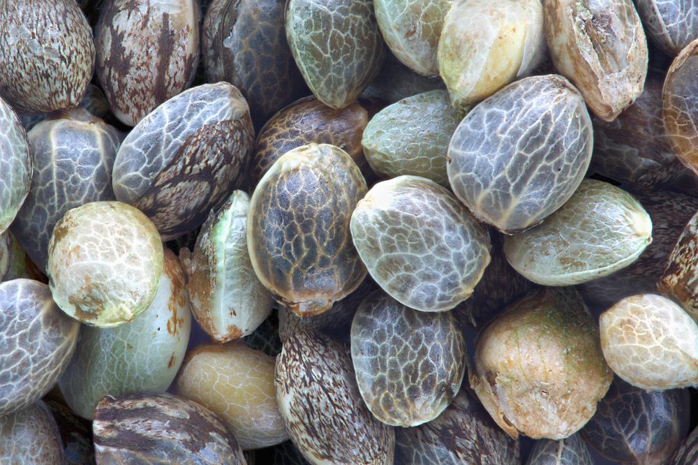 Virgin Organic Hemp Seed Oil