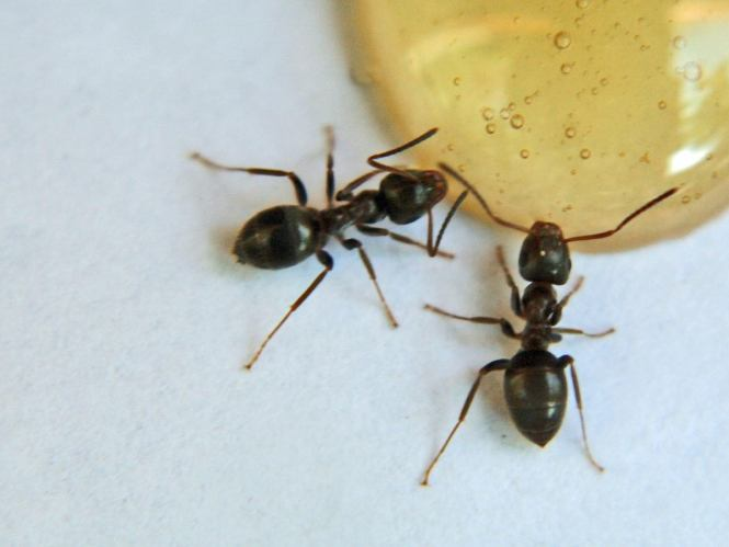 How To Get Rid Of Ants All You Need To Kill The Whole Colony Is