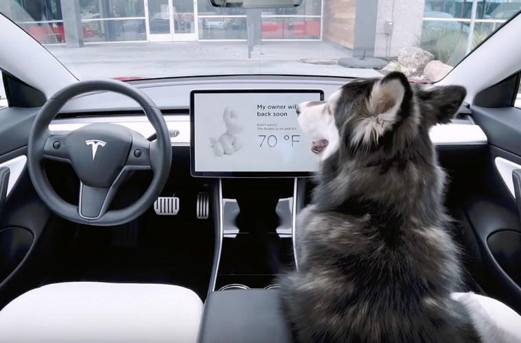 Tesla Dog Mode