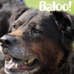 The Adventures of a Dog Named Baloo #BrightMind #CBias