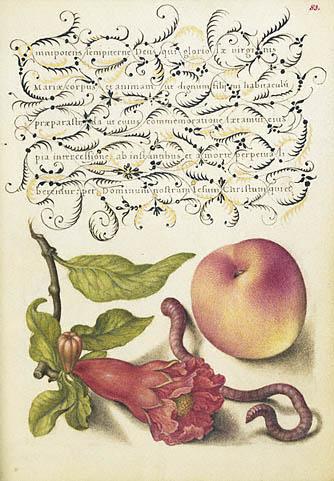 Mira calligraphiae monumenta fol. 83