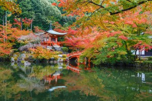 Picture of fall colors in trees, shrubs, and grasses at Daigoji Temple in Kyoto, Japan. Beautiful, but may cause allergies.