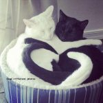 Black and white cats cuddling in a basket with tails curled in heart shape