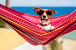 dog relaxing on a fancy red hammock with sunglasses after application of insect repellent