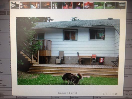 From our friends at the Sudbury Real Estate board...and yes that dog is doing what you're thinking he's doing.