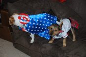 The dogs at our infamous Politically Incorrect Halloween party.