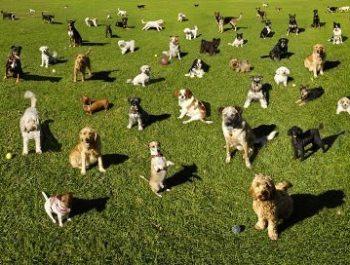 toronto dog parks