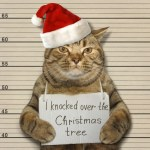Cat Christmas Hacks | How To Keep Them out of a Christmas Tree #Christmastree #pets #cathacks #catlovers