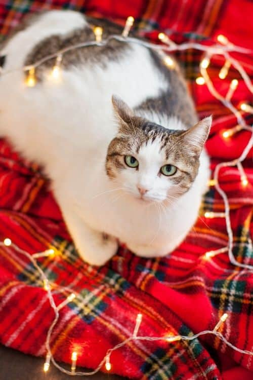 How To Keep The Cat Out of The Christmas Tree | 13 Ways #cat #petowner #Christmashacks #Christmas