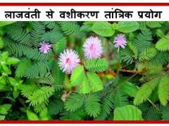 Lajwanti se Vashikaran Totke Tantrik Prayog