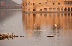 Jaipur63