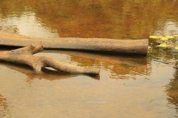 AngkorWatTapinaklari06