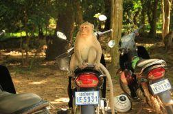 AngkorWatTapinaklari28