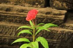 AngkorWatTapinaklari62