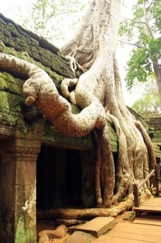 AngkorWatTapinaklari70