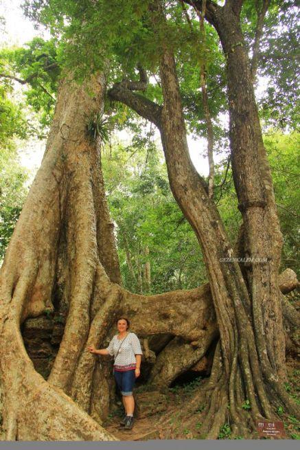 AngkorWatTapinaklari80