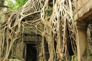 AngkorWatTapinaklari84