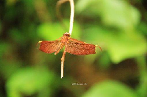 AngkorWatTapinaklari91