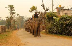 ChitwanFillerveKano13