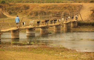 ChitwanFillerveKano22