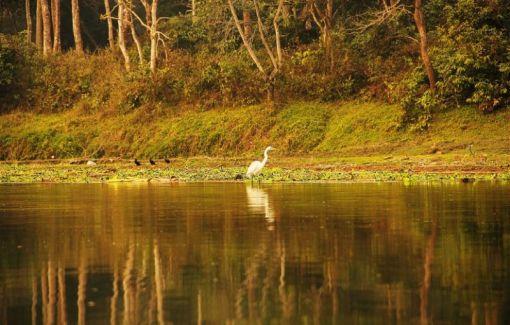 ChitwanFillerveKano23