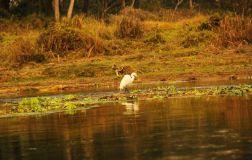 ChitwanFillerveKano24