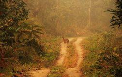 ChitwanJeepSafari07