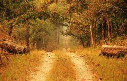 ChitwanJeepSafari13