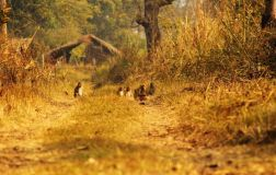 ChitwanJeepSafari30