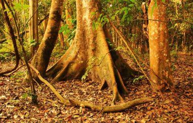 ChitwanOrmanYuruyusu10