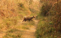 ChitwanOrmanYuruyusu30