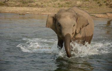ChitwanOrmanYuruyusu33