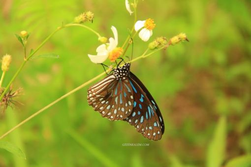 TaylandFilBakiciligi33