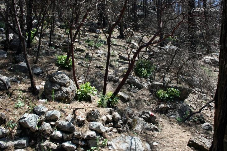 Olimpos - Adrasan arası patika yolu