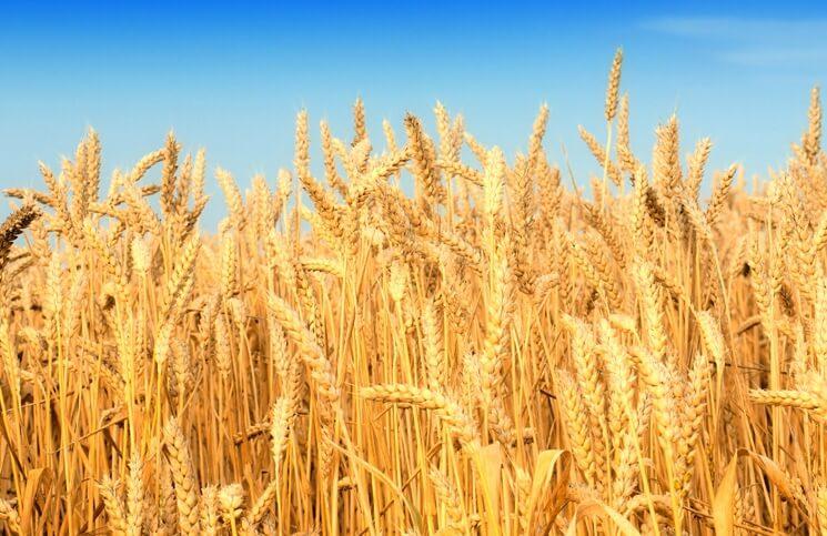 Afbeeldingsresultaat voor graan