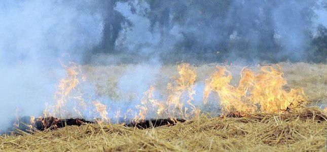 Islamic State terrorist group burns 5,000 acres of crops across Iraq