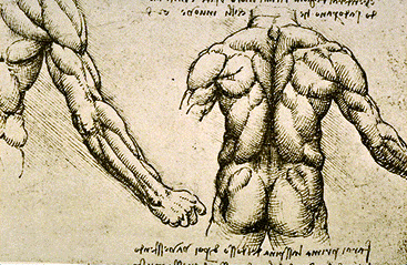 https://i2.wp.com/www.gfmer.ch/International_activities_En/Images/Leonardo/Muscles1.jpg