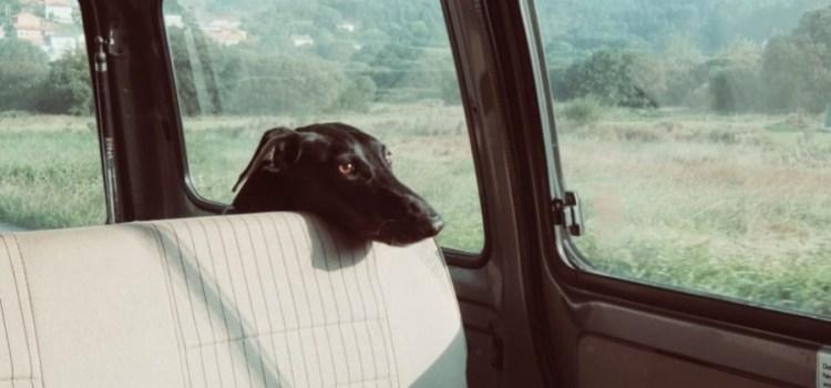 Help, mijn hond is wagenziek