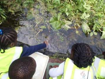 pond dipping 187