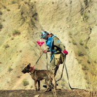 Tadschikistan_Minensuchhund beim Training