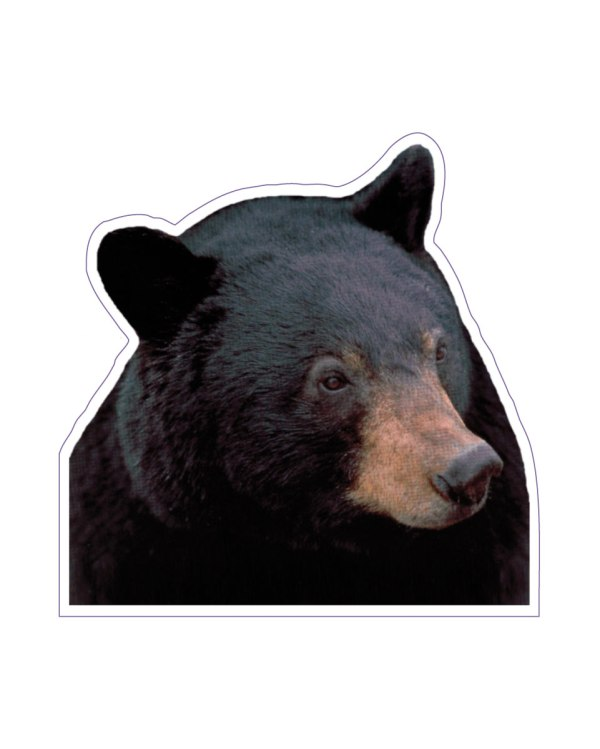 "Black Bear Magnet or Sticker for Indoor or Outdoor Use 5"" x 5"""