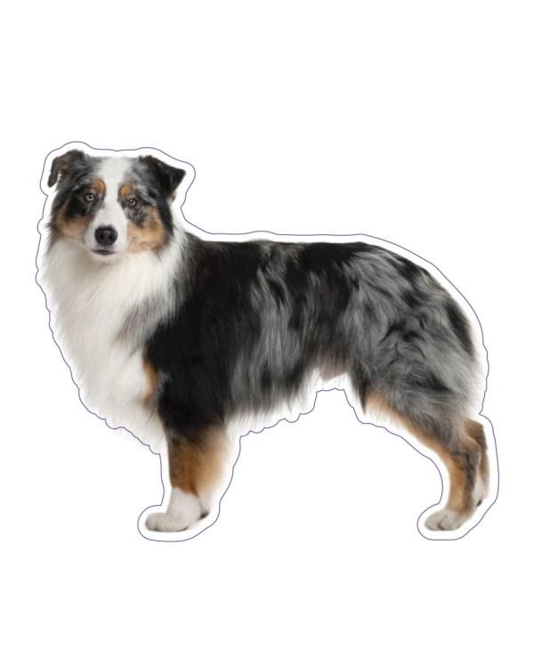 """Australian Shepherd Magnet or Sticker for Indoor or Outdoor Use 6"""" x 5"""""""